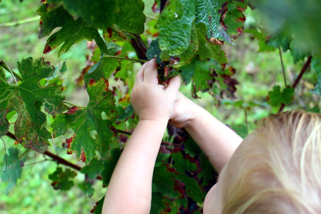 fannice-fashion-grape-harvest-winter-2014-02