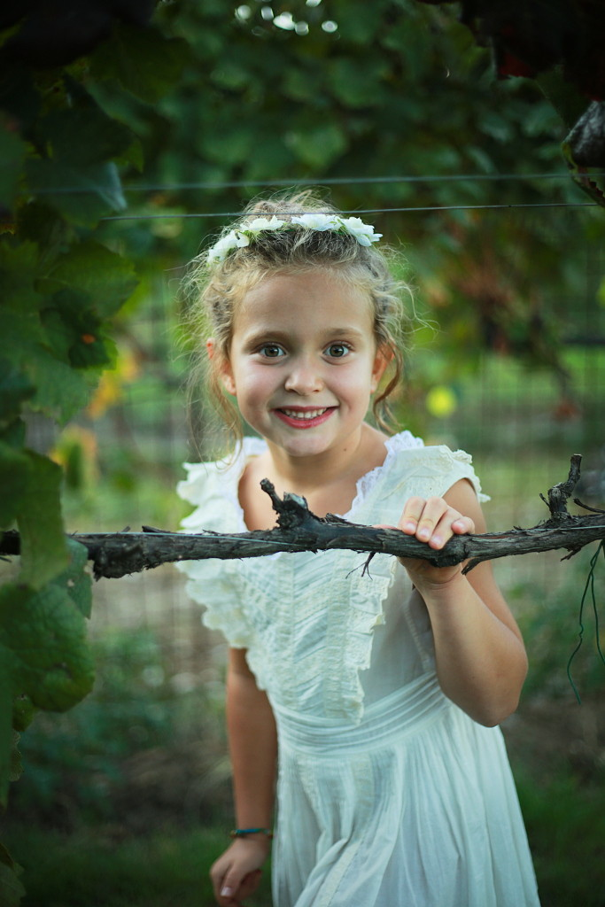 Grape harvest 2015 Anna peeking from the rows of grape